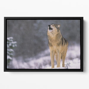 Wolf Howling in White Snow Floating Framed Canvas - Canvas Art Rocks - 2