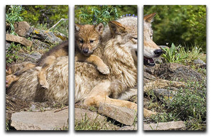 Wolf cubs and mother at den site 3 Split Panel Canvas Print - Canvas Art Rocks - 1