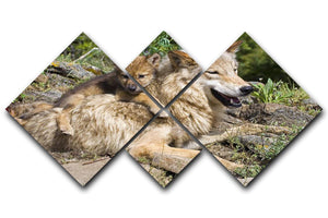 Wolf cubs and mother at den site 4 Square Multi Panel Canvas - Canvas Art Rocks - 1