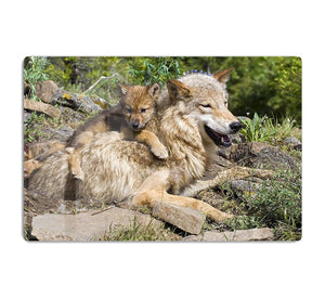 Wolf cubs and mother at den site HD Metal Print - Canvas Art Rocks - 1