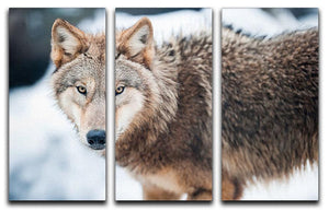 Wolf standing in the snow 3 Split Panel Canvas Print - Canvas Art Rocks - 1
