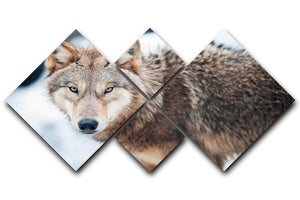 Wolf standing in the snow 4 Square Multi Panel Canvas - Canvas Art Rocks - 1