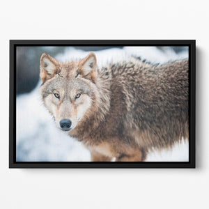 Wolf standing in the snow Floating Framed Canvas - Canvas Art Rocks - 2