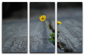 Yellow flower growing in street 3 Split Panel Canvas Print - Canvas Art Rocks - 1