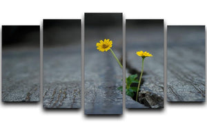 Yellow flower growing in street 5 Split Panel Canvas  - Canvas Art Rocks - 1