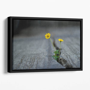 Yellow flower growing in street Floating Framed Canvas