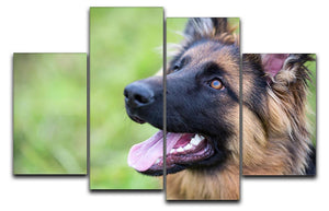 Young dog german shepherd on the grass in the park 4 Split Panel Canvas - Canvas Art Rocks - 1