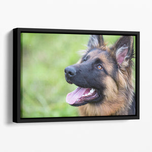Young dog german shepherd on the grass in the park Floating Framed Canvas - Canvas Art Rocks - 1