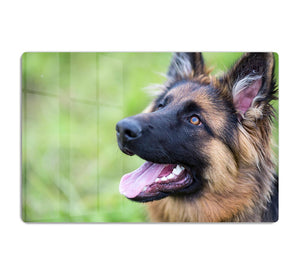 Young dog german shepherd on the grass in the park HD Metal Print - Canvas Art Rocks - 1