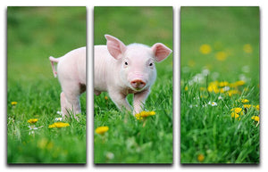 Young funny pig 3 Split Panel Canvas Print - Canvas Art Rocks - 1