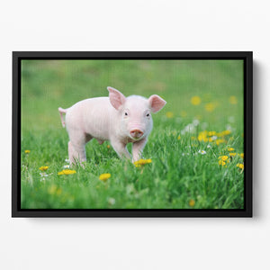 Young funny pig Floating Framed Canvas - Canvas Art Rocks - 2