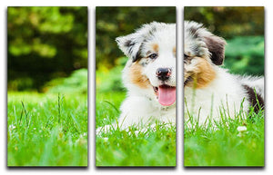 Young puppy lying on fresh green grass in public park 3 Split Panel Canvas Print - Canvas Art Rocks - 1