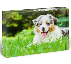 Young puppy lying on fresh green grass in public park Acrylic Block - Canvas Art Rocks - 1