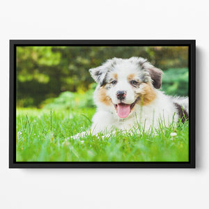 Young puppy lying on fresh green grass in public park Floating Framed Canvas - Canvas Art Rocks - 2
