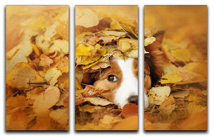 Young red border collie dog playing with leaves 3 Split Panel Canvas Print - Canvas Art Rocks - 1
