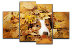 Young red border collie dog playing with leaves 4 Split Panel Canvas - Canvas Art Rocks - 1