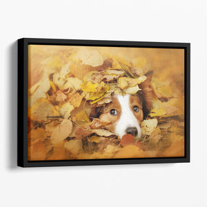 Young red border collie dog playing with leaves Floating Framed Canvas - Canvas Art Rocks - 1