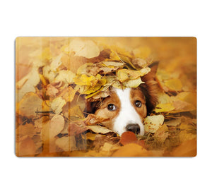 Young red border collie dog playing with leaves HD Metal Print - Canvas Art Rocks - 1