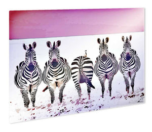 Funky Zebras Metal Print - Canvas Art Rocks - 1