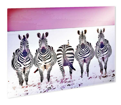 Funky Zebras Metal Print - They'll Love Wall Art - 1