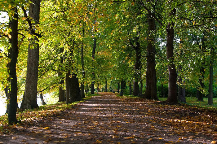 autumn road with leaves in park Wall Mural Wallpaper