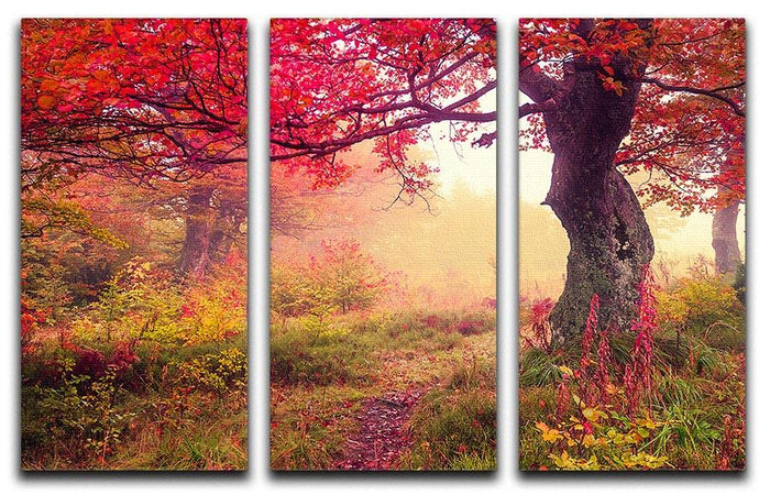 autumn trees in forest 3 Split Panel Canvas Print