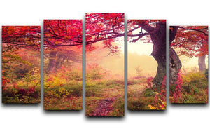 autumn trees in forest 5 Split Panel Canvas  - Canvas Art Rocks - 1