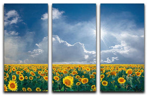 big sunflowers field and blue sky 3 Split Panel Canvas Print - Canvas Art Rocks - 1
