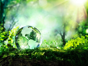 crystal globe on moss in a forest Wall Mural Wallpaper - Canvas Art Rocks - 1