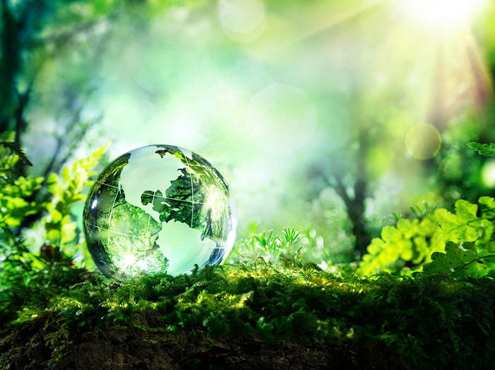 crystal globe on moss in a forest Wall Mural Wallpaper