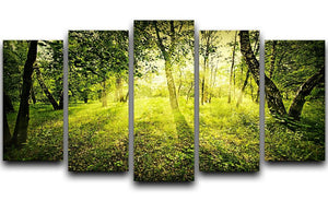 deep forest on summer morning 5 Split Panel Canvas  - Canvas Art Rocks - 1