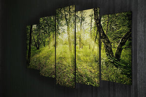 deep forest on summer morning 5 Split Panel Canvas  - Canvas Art Rocks - 2