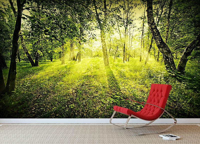 deep forest on summer morning Wall Mural Wallpaper - Canvas Art Rocks - 2