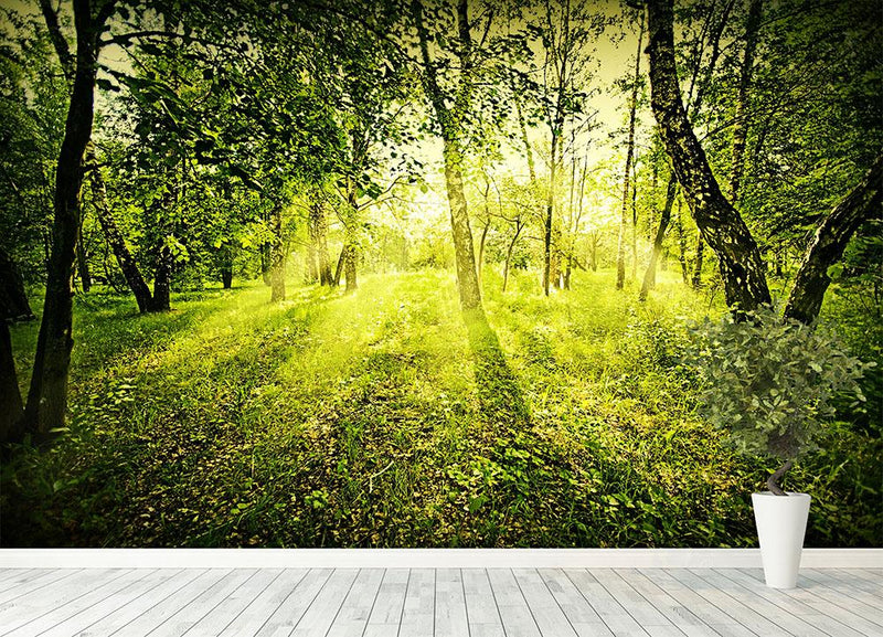 deep forest on summer morning Wall Mural Wallpaper - Canvas Art Rocks - 4
