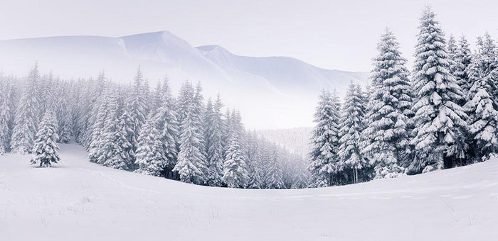 foggy winter landscape Wall Mural Wallpaper