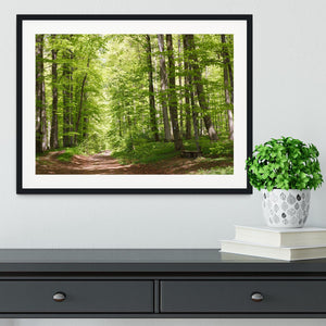 forest during spring Framed Print - Canvas Art Rocks - 1