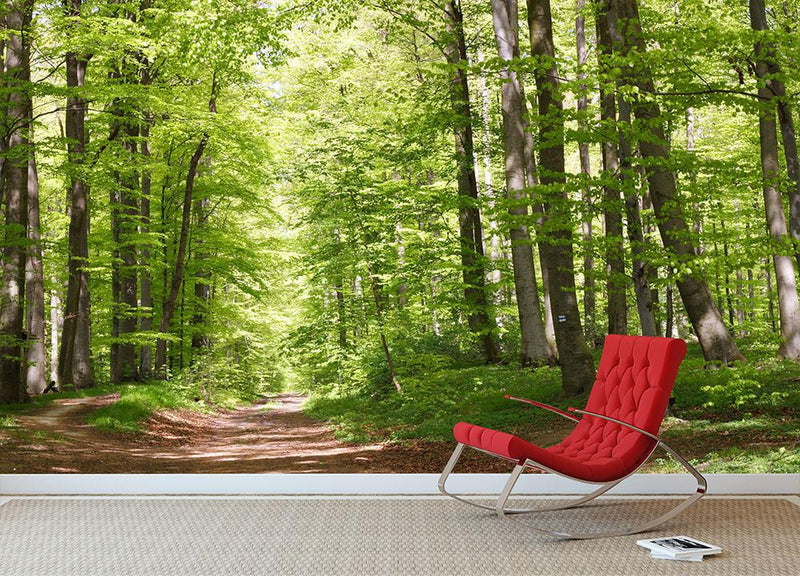 forest during spring Wall Mural Wallpaper - Canvas Art Rocks - 1