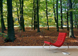 forrest edge in autumn Wall Mural Wallpaper - Canvas Art Rocks - 2