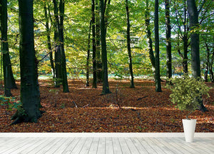 forrest edge in autumn Wall Mural Wallpaper - Canvas Art Rocks - 4
