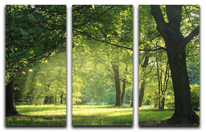 trees in a summer forest 3 Split Panel Canvas Print