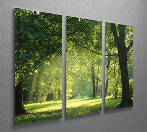 trees in a summer forest 3 Split Panel Canvas Print - Canvas Art Rocks - 2