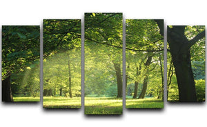 trees in a summer forest 5 Split Panel Canvas  - Canvas Art Rocks - 1
