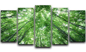 trees meeting eachother at the sky 5 Split Panel Canvas  - Canvas Art Rocks - 1