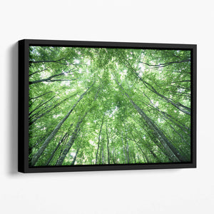 trees meeting eachother at the sky Floating Framed Canvas