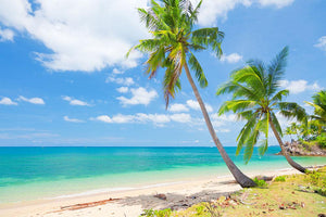tropical beach with coconut palm Wall Mural Wallpaper - Canvas Art Rocks - 1