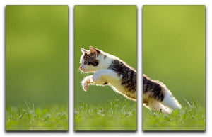 young cat jumps over a meadow in the backlit 3 Split Panel Canvas Print - Canvas Art Rocks - 1