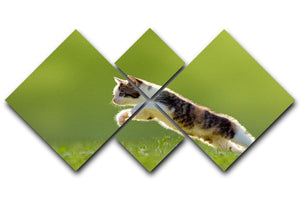 young cat jumps over a meadow in the backlit 4 Square Multi Panel Canvas - Canvas Art Rocks - 1