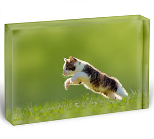 young cat jumps over a meadow in the backlit Acrylic Block - Canvas Art Rocks - 1