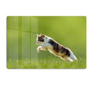 young cat jumps over a meadow in the backlit HD Metal Print - Canvas Art Rocks - 1
