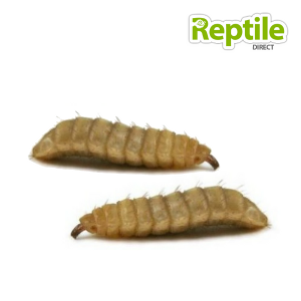 Frozen Reptile Food Free Delivery Uk